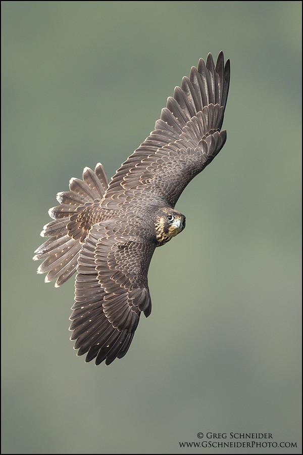 Best Wings In Kitchener