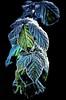 Frozen In Time - Chimaira (Janusz Kudlak) Tags: ilovemywife agnieszka myniu pastuch sony alpha700 best england frozen winter uk iceday smile smileonsunday