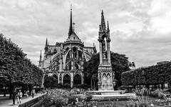 Cathdrale Notre-Dame de Paris (D Lorente) Tags: bw paris nikon bn notredame cathdrale dlorente