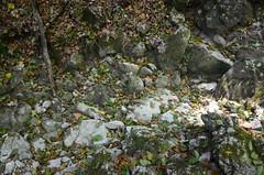 Aga kus on oja???? (anuwintschalek) Tags: summer creek austria sommer dry august bach brook niederösterreich schlucht trocken suvi draught 2015 oja bachbett klamm dürre steinwandklamm triestingtal põud kuiv d7k nikond7000 18140vr ojasäng