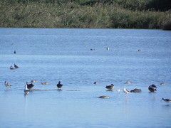 file14264 (Gianluigi Roda / Photographer) Tags: landscapes delta waters waterbirds waterlands