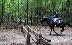 Doorn (Steenvoorde Leen - 1.5 ml views) Tags: horses horse jumping cross doorn pferde pferd reiten manege paard paarden springen 2015 utrechtseheuvelrug hindernis sgw arreche paardencross manegedentoom