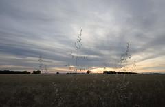 Lavande 1 (arrixaca15) Tags: sunset tree alpes wheat lavender campo provence lavande campagne provenza lavanda bl provena