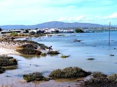 GF431 (molarinho29) Tags: sea praia beach portugal nature island mar sand areia natureza algarve ilha olhão armona