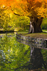 (Cathy G) Tags: autumn christchurch reflection tree green canon river golden colours foliage oxford oxfordshire autumnal canon28135mm canon7d
