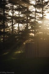 IMG_1931 (hillarycharris) Tags: morning trees mist nature fog sunrise canon landscape outdoors foggy tamron morningmist naturephotography morningfog mistymorning treesinfog foggytrees foggylandscape sunrisephotography treesinmist mistylandscape canonrebelt5 canoneost5