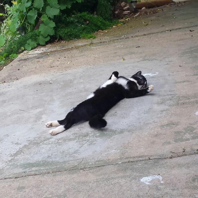 drama cat :P
