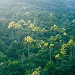 DSC_5350 (terencehonin) Tags: trees sun sunlight mountain tree green nature darren sunshine mom 50mm nikon jacob hill tai brenda tam f12 taitamreservoir taitamcountrypark d800e