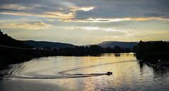 Mosel @ Schweich (Natural Photography by CJH) Tags: schweich trier mosel river fluss nikon landscape d750 50mm 50f18 goldenhour water boat birds vogel