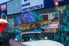 Street Art- The Pond, Napier (flyingkiwigirl) Tags: street art the pond napier