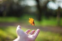 catch the small autumn (N.sino) Tags: m9 summilux50mm fallenleaf autumnleaf hand