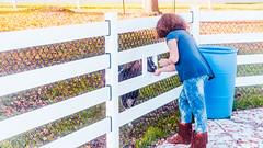Girl Feeding Goat (Buckley Fence, LLC) Tags: whitefencefarm chicagoland pettingzoo illinois fall steelfence wiremesh blackmesh buckleyfence steelboard whitefence goldenhour sunset goat girl feeding fenceslot