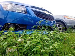 (CapBels 2) Tags: car coche auto carro blue azul grass hierba low stance chevrolet cruze