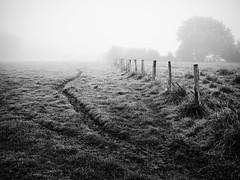 Le sentier des vaches (steph20_2) Tags: panasonic gh3 20mm m43 lumix monochrome monochrom pr campagne countryside clture brouillard automne noir noiretblanc ngc blanc black bw white skanchelli paysage landscape