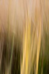 Gras in Bewegung 1 (Hiheinz) Tags: grser effekt bewegung dynamik regionen natur gras movement outdoor wind effects