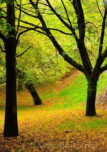 Jardins de outono...