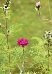DSC_3207 (PeaTJay) Tags: nikond750 reading lowerearley berkshire macro micro closeups gardens outdoors nature flora fauna plants flowers