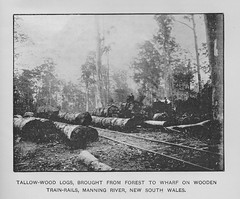 Tallow-wood logs from Manning River - New South Wales, The Mother Colony 1896 (AndyBrii) Tags: nsw newsouthwales 1896 frankhutchinson sydney
