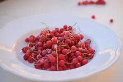 Frozen red currants (sjmanning81) Tags: redandwhite macrolens nikond3300 fruit foodphotography
