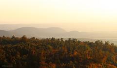 Ősz a hegyen #5 (Gy:A ( attilafoto.hu )) Tags: attilafoto budapest autumn ősz normafa jánoshegy mountain colors tree lanscape reg green yellow