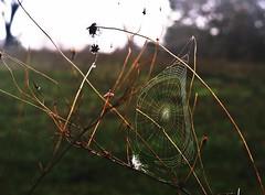 * (PattyK.) Tags: ioannina giannena epirus ipiros greece griechenland hellas ellada europe whereilive web spidersweb nature october 2016 autumn amateurphotographer        nikond3100