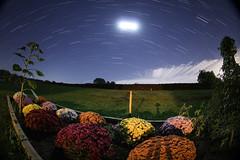 An Autumn Star Trail (Radical Retinoscopy) Tags: starstax autumn fall nightphotography lowlight stacking moon lunar canont6s canon815mm fisheye night astronomy astrophotography mums blooming garden pa pennsylvania lancaster