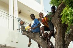 des batteurs 2 (agu!) Tags: lugares gente dakar senegal sngal nios garons boys chavales zagales rbol tree arbre tambores drums tambours jugando playing jouant subidos climbed monts