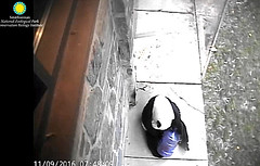 I gotta talk to my keeper, this thing isn't full.  ./af963.png (heights.18145) Tags: smithsoniansnationalzoo beibei meixiang corner panda bear pandabear cuteanimals bearcubs motheranimals ccncby