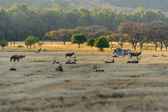 Milwane Wildlife Sanctuary, Swaziland (GlobeTrotter 2000) Tags: africa milwane south southafrica drive game impala park safari sanctuary swaziland tourism travel visit wildlife zebra