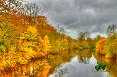 Reflections of Autumn. (Edward Dullard Photography. Kilkenny, Ireland.) Tags: kilkenny ireland leinster eire europe cillchainnigh oldpicturesofkilkenny oldphotographsofkilkenny oldkilkennyphotos kilkennypeople tourismireland kilkennytourism edwarddullardphotographykilkennycityireland nature landscape autumn fall herbst reflection river trees