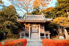 Tohoku 2016 - 483 (西文 Simon) Tags: 日本東北 miyagigun miyagiken 日本
