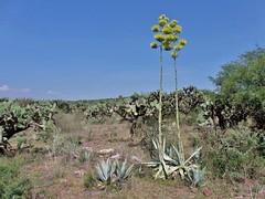semidesierto (carlos mancilla) Tags: paisajes landscapes semidesierto olympussp570uz