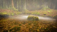 mystic sacred well (p.hakala.p) Tags: sacredwell spring fountain forest purewater stones rocks springwater purenature finnishnature uhrilähde mist stone