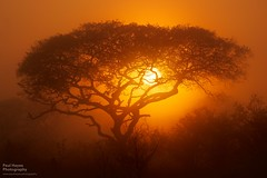 African sunrise (FofR) Tags: sunrise dawn tree silhouette red hazy misty sunny sunshine yellow sky africa southafrica bush outdoors adventure safari travel
