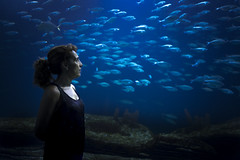 Untitled (miangusapa) Tags: people woman fish colour 35mm aquarium loneliness scene nostalgia feeling frustration drama lowkey ideas feelings yearn hightcontrast homesickness rx1 miangusapa sonyrx1