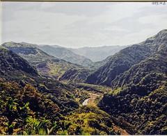 DSC02132 (Alan A. Lew) Tags: ruili taiwan alishan 2015