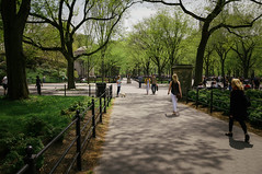 Central Park, Upper Manhattan, Summer (Jeffrey) Tags: nyc trees summer people ny nature beauty leaves afternoon natural weekend centralpark manhattan parks sunny uptown lazy flowering summertime tamed blooming inbloom uppermanhattan
