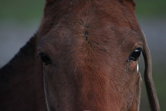 Una sola mirada. (alejandro krok) Tags: horse look caballo mirada