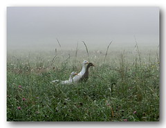 Morgenspaziergang (Gerhard K●gler) Tags: österreich nebel wiese steiermark morgennebel morgenspaziergang südsteiermark straden vulkanland