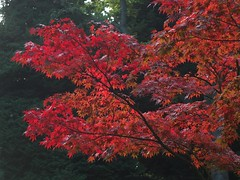 Japanse tuin (Gerard Stolk (vers L'Action de grâce)) Tags: herfst denhaag haag thehague clingendael lahaye japansetuin