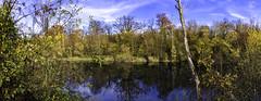 forêt en automne (xsalto) Tags: automne