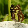 Vlinder. Butterfly. (frankvanroon) Tags: vlinder butterfly groen green awesome amazing wings nature life