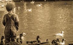 Feeding the Ducks (Camera_fanatic) Tags: old boy vacation canada cute travelling sepia vancouver photoshop island kid travels bc little pentax antique profile dramatic ducks style columbia victoria retro vancouverisland adobe british tamron vr lightroom 18270 k30
