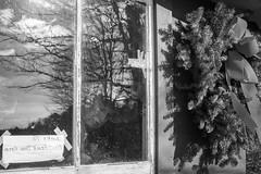 selling christmas trees (John Moyers) Tags: bristol vermont christmastrees photobyjohndmoyers lathropbrothers troutbrooktreefarm