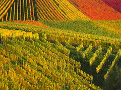 Colorful Autumn Vineyard - Stuttgart, Germany (Batikart) Tags: autumn red orange plants plant green fall nature colors leaves lines yellow rural canon germany landscape geotagged outdoors deutschland leaf vines october europa europe seasons quilt wine stuttgart stripes patterns hill felder foliage growth vineyards grapes repetition fields greenery recreation agriculture patchwork relaxation multicolored ursula bltter grape variation rolling indiansummer wein weinberg sander g11 badenwrttemberg 2015 herbstfrbung 100faves 200faves luginsland 300faves batikart canonpowershotg11