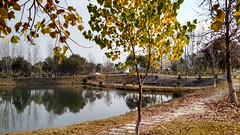 Autumn Taxila Cantt (KASHIF_AFRIDI) Tags: autumn taxila cantt