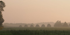 Six in a row (virgil martin) Tags: fog haze landscape wellingtoncounty ontario canada olympusomdem5 oloneo microsoftice gimp