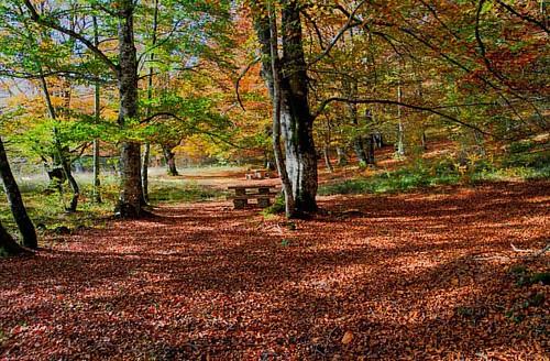 #montesantiago #burgos #naturaleza  #fotografia #photography #bucólico #arboles #hayas #bosque