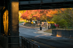 16-8197 (George Hamlin) Tags: virginia alexandria old town king street railroad underpass fall foliage colorful orange yellow pavement signs auto bridge abutment sunrise photo decor george hamlin photography