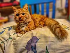 P Mitts (emj1300) Tags: mylittlebuddy friend cat angel boss